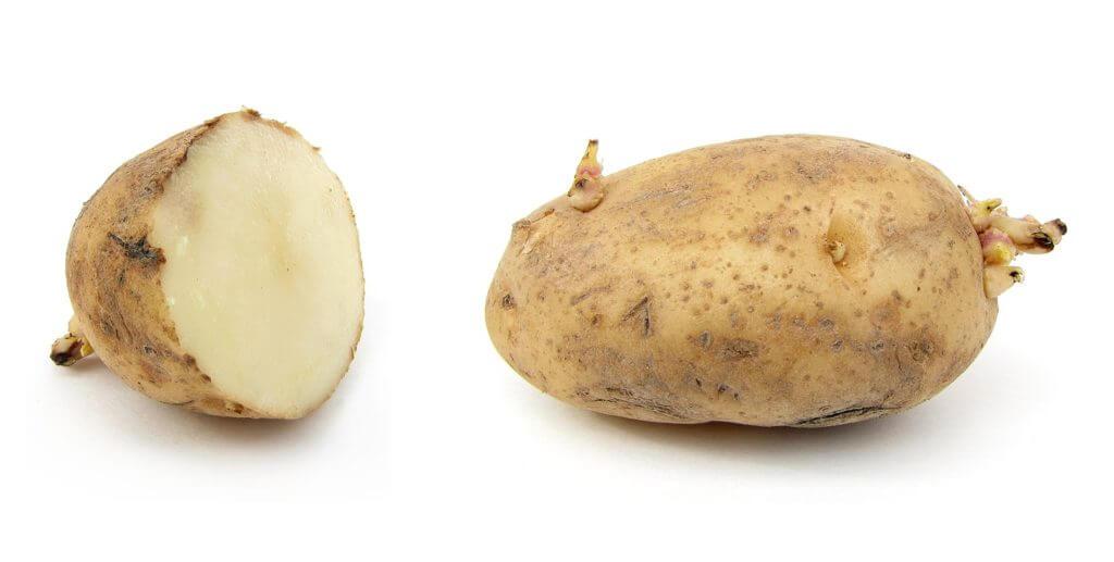 prevent potato sprouting
